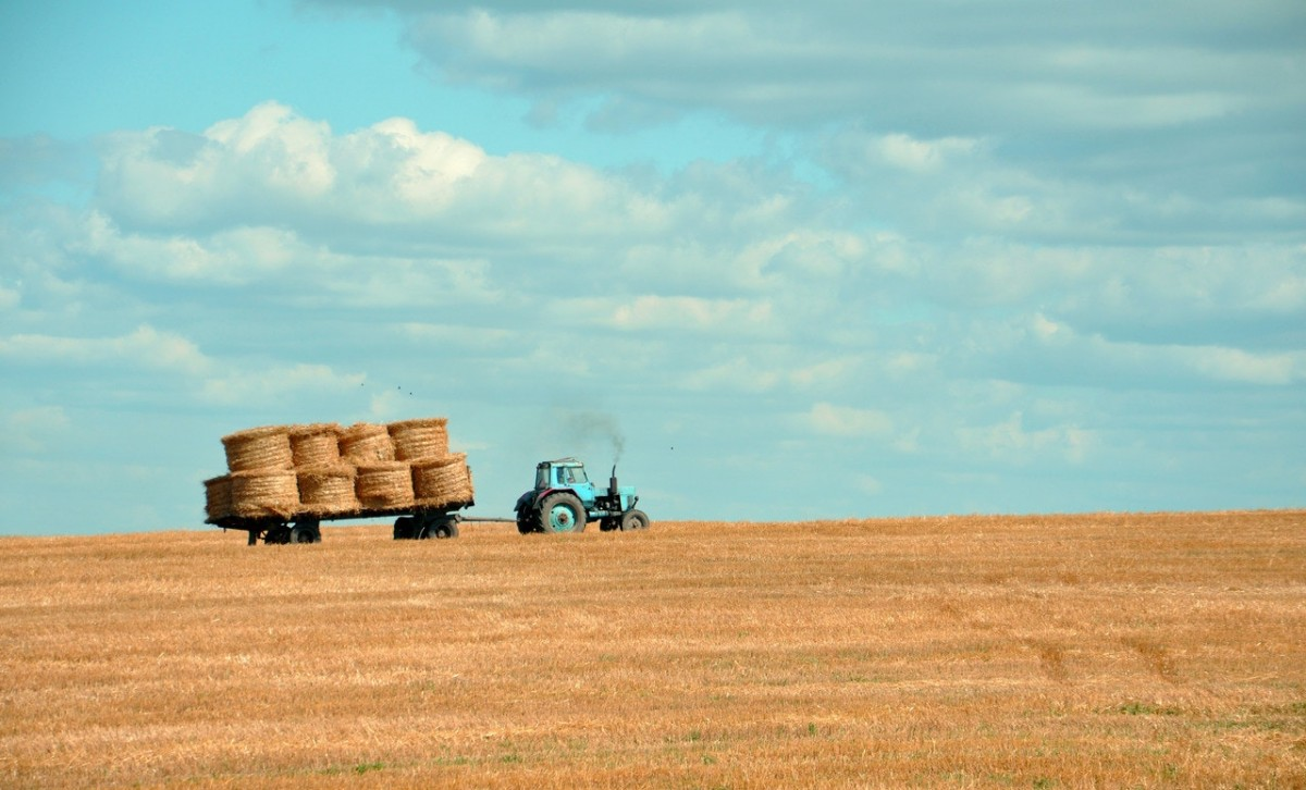 tractor taking home harvest